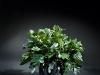 14 inch Zambia Zambafolia 3 stems
