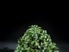17.5 inch Green Pothos 3 stems
