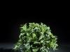 17.5 inch Golden Pothos 3 stems